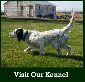 Visit our Kennel